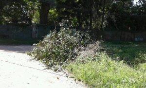 Piden recolección de ramas en un barrio de Del Viso