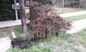 Reclaman limpieza por árboles y ramas caídos