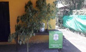 La policía incautó 1,5 Kg de marihuana fraccionada y 4 plantas de cannabis
