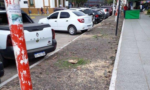 El Municipio explicó por qué se talaron varios árboles de la Plaza 12 de Octubre